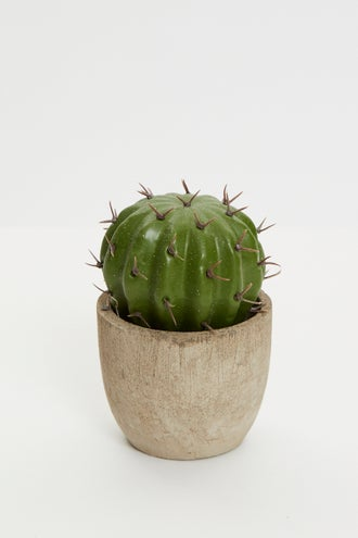 Mini Desk Cactus